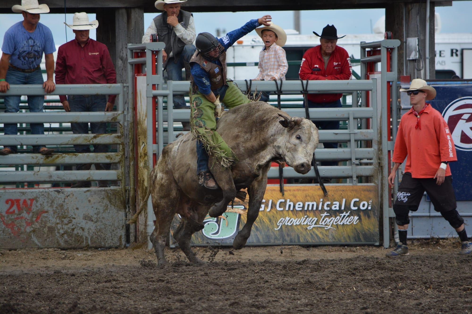 Bull Riding Manitoba Stampede