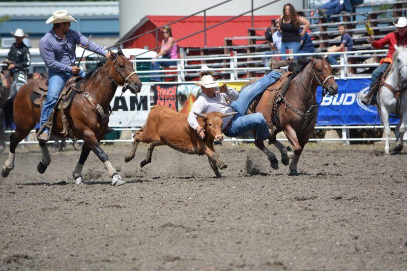 Steer Wrestling Manitoba Stampede