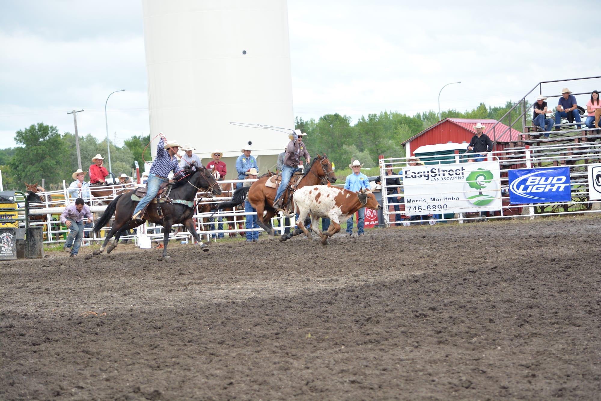 Team Roping Manitoba Stampede