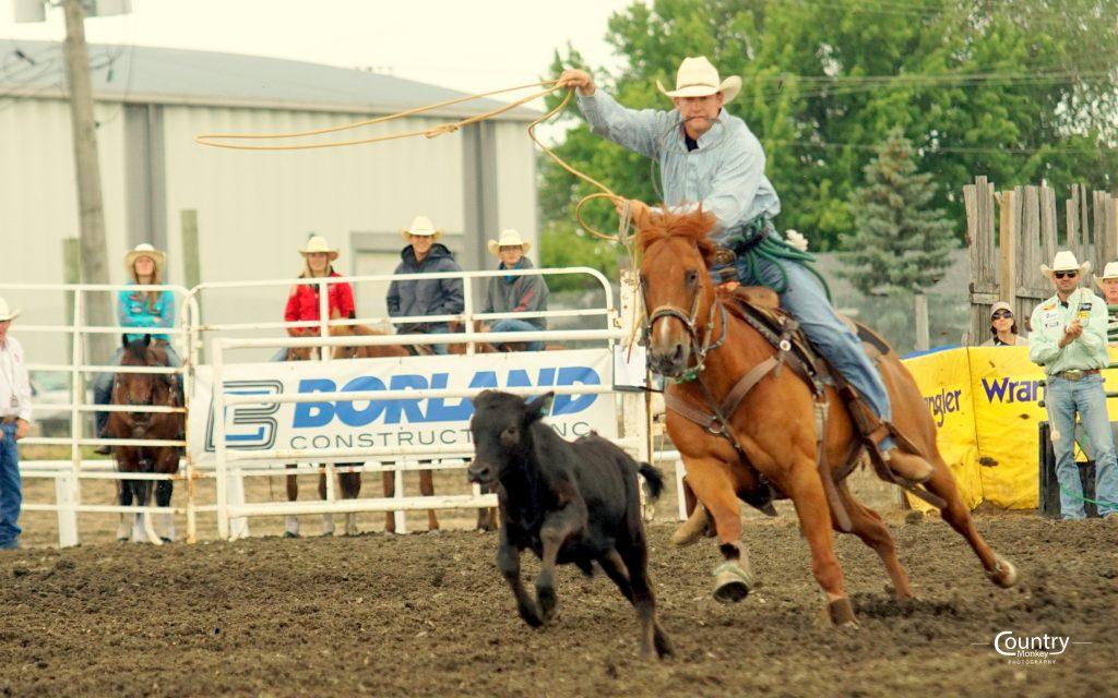 Tie Down Roping Manitoba Stampede
